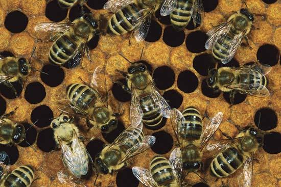 honeycomb_bees-2861