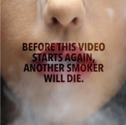 smoke-vine1